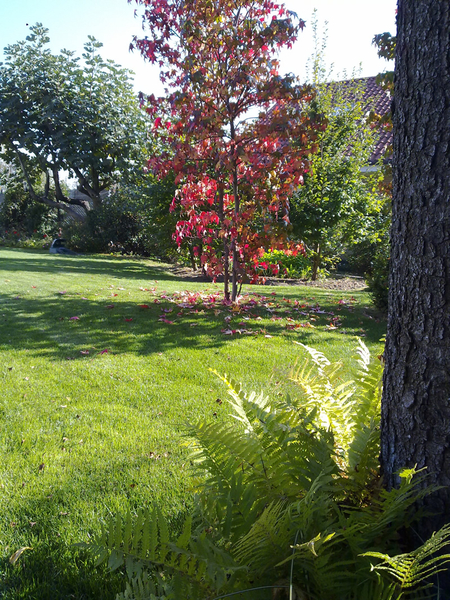 Giardini  Torino Giardini